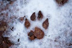 Orme nella neve Fotografie Stock Libere da Diritti