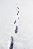 Orme nella neve Fotografia Stock Libera da Diritti