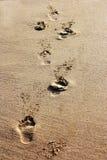 Orme nella sabbia Immagine Stock