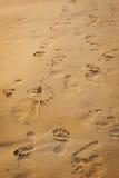 Orme nella sabbia Immagine Stock Libera da Diritti