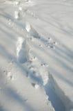 Orme in neve Fotografia Stock Libera da Diritti