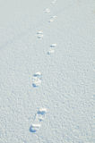 Orme in neve Immagine Stock