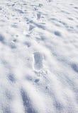 Orme in Neve-ritratto Immagine Stock