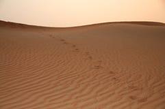 Orme su una duna del deserto Fotografia Stock Libera da Diritti