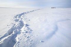 Orme sulla neve immagini stock libere da diritti