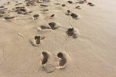Orme sulla sabbia Fotografie Stock Libere da Diritti