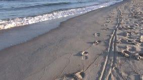 Orme sulla spiaggia video d archivio