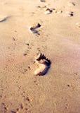 Orme sulla spiaggia sabbiosa Fotografia Stock