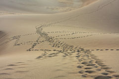 Orme sulle dune di sabbia Fotografia Stock Libera da Diritti