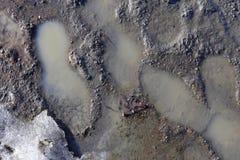 Orme umane multiple su una superficie bagnata fotografie stock