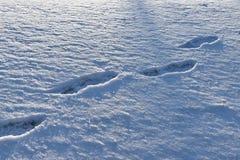 Orme umane nella neve Immagine Stock