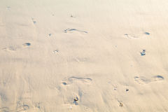 Orme umane sulla spiaggia Fotografia Stock Libera da Diritti
