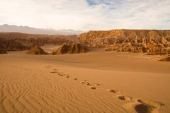 Orme a Valle de la Muerte nel deserto di Atacama Fotografie Stock