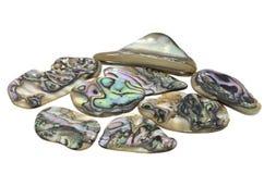 Ormeau Shell photo stock