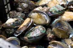 Ormeau sur le marché aquatique de biens Images stock