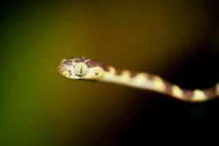 Ormen behandla som ett barn Royaltyfri Bild