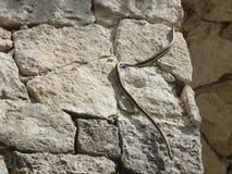Ormen på vaggar Arkivbild