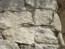 Ormen på vaggar Royaltyfria Bilder