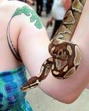 Ormförlagehanterare som visar hennes pytonorm Arkivfoton