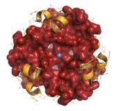 Ormone del peptide dell'insulina, struttura chimica. Droga importante nella t Fotografie Stock Libere da Diritti
