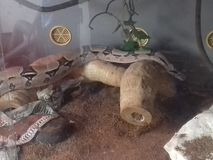 Ormreptilhusdjur royaltyfri bild