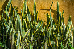 Ormväxt arkivfoton