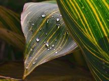 Ormväxt med droppe som reflekterande ljus Arkivbilder