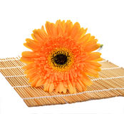 Ornage flower of gerber isolated on mat and white background Stock Photography