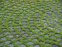 Ornament. Out of cobbles and moss Stock Image