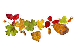Ornament from autumn leaves Stock Image