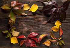 Ornament boarder from autumn leaves Stock Photos
