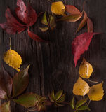 Ornament boarder from autumn leaves Royalty Free Stock Photos