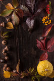 Ornament boarder from autumn leaves Royalty Free Stock Images