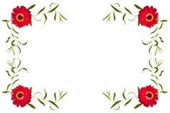 Ornament czerwoni zinnias i gałąź z bezpłatną przestrzenią dla teksta dalej Obrazy Royalty Free