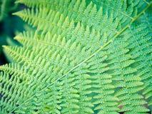 Ornament of fern leaf, symmetrical diagonal pattern, fresh green. Detail of fern leaf, bracken sword, fresh saturated green symmetry pattern, nature Stock Images