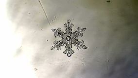 Ornament formed from crystal branches of the growing in snowflake stock footage