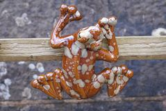 Ornament of frog Royalty Free Stock Image