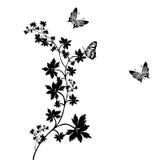 Ornament met vlinder Stock Foto