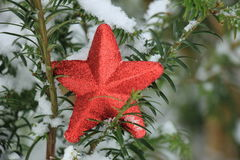 Ornament on a pine branch Royalty Free Stock Images