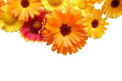 Ornament from summer beautiful flowers stock photography