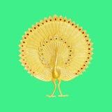Ornament van goud geplateerde uitstekende bloemen, Pauwgipspleister van gouden p Stock Afbeeldingen