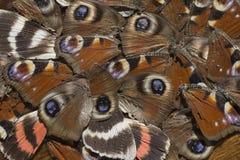 Ornament van stukken lijken van insecten stock fotografie