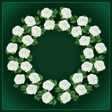 Ornament of white roses, element for design Stock Image