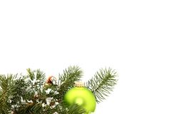 ornament zielona sosna Fotografia Royalty Free