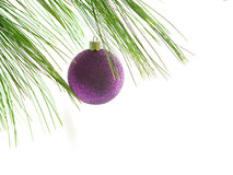 Ornament1. Purple Christmas ornament on pine branch Stock Photo