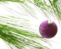 Ornament2. Purple Christmas ornament on pine branch Stock Photography