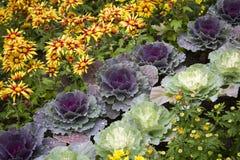Ornamentacyjna kapusta i kwiaty zdjęcie stock