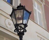 Ornamentacyjna lampa, Potsdam, Niemcy Obrazy Stock