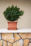 Ornamentacyjna roślina na ścianie Zdjęcia Royalty Free