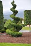 Ornamentacyjna roślina z przycinać artystyczny Zdjęcia Royalty Free